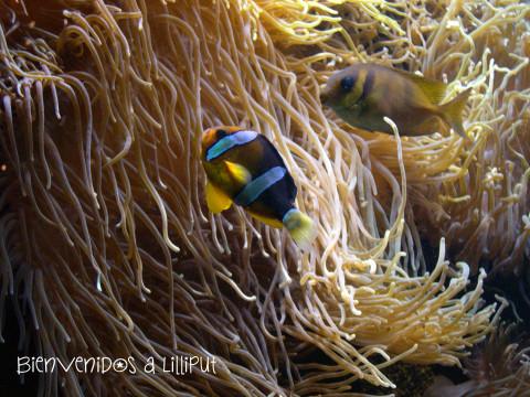 Nemo, OCeanópolis BRest