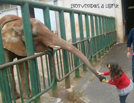 Elefanta Cristina Cabárceno
